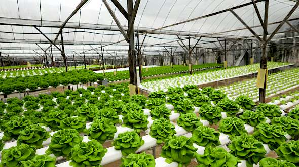 Dubai Will Soon Be Home To The World's Largest Hydroponic Farm