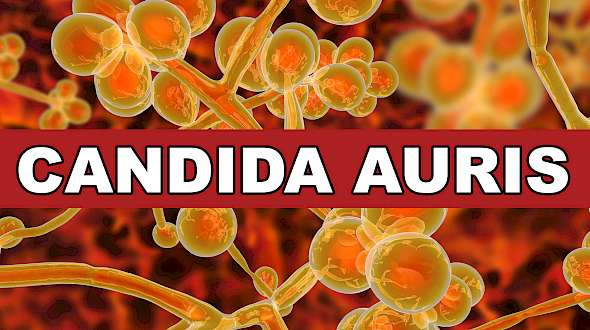 Do You Know What Candida Auris Is? You Should