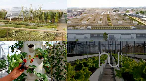 Expect to See Lots of Rooftop Farms in Cities