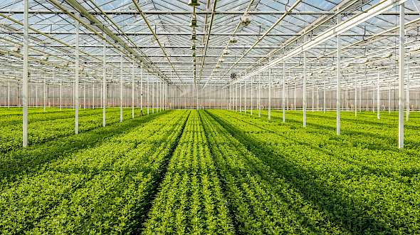 Indoor Farming's Bright Lights