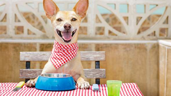 Pets Go Gluten-Free, Non-GMO Just Like Their Owners
